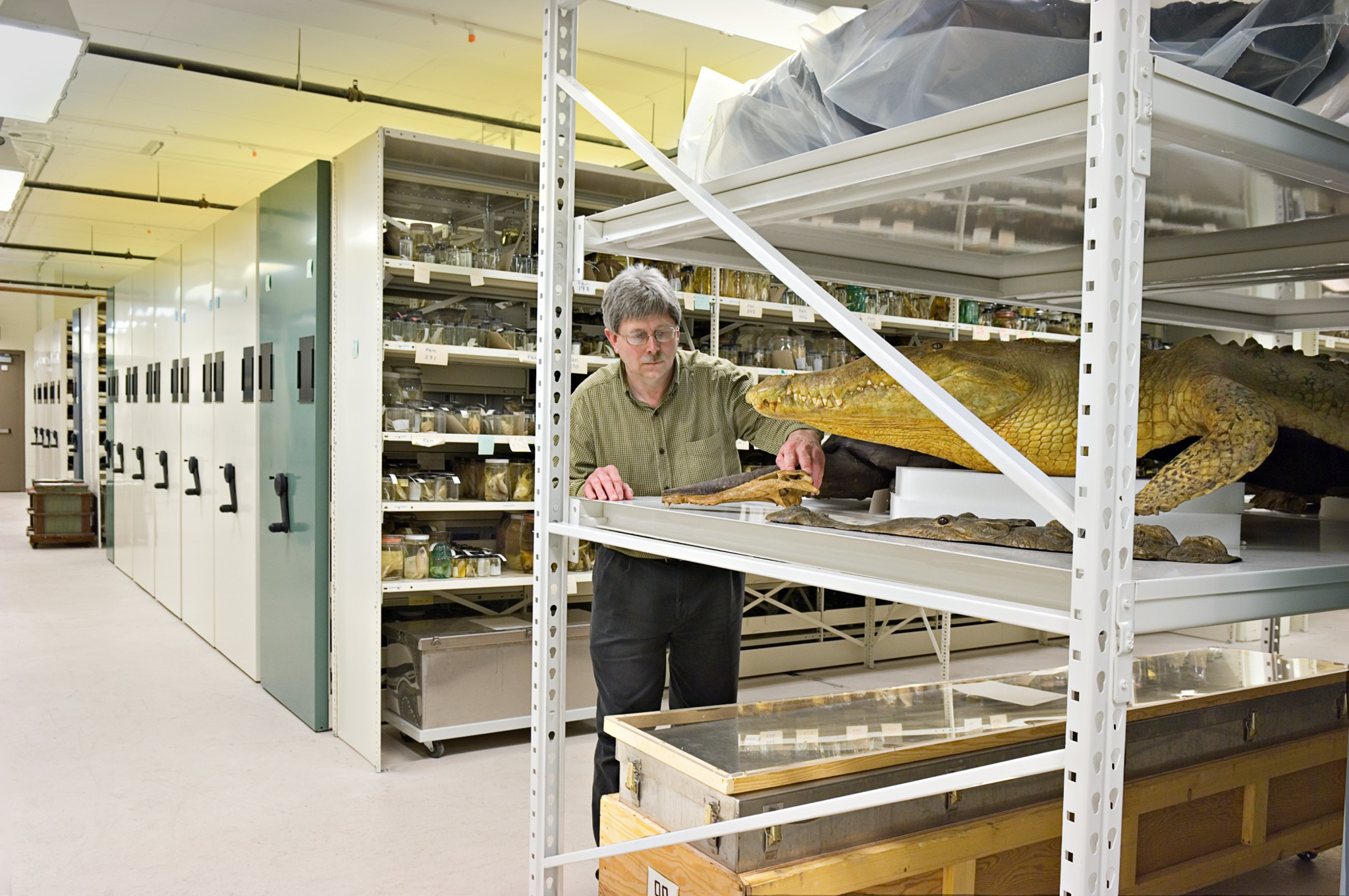 Wide span shelving for oversized museum storage