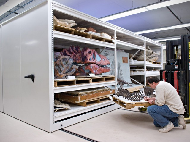 Dinosaur Bone storage on high density mobile storage system in a museum