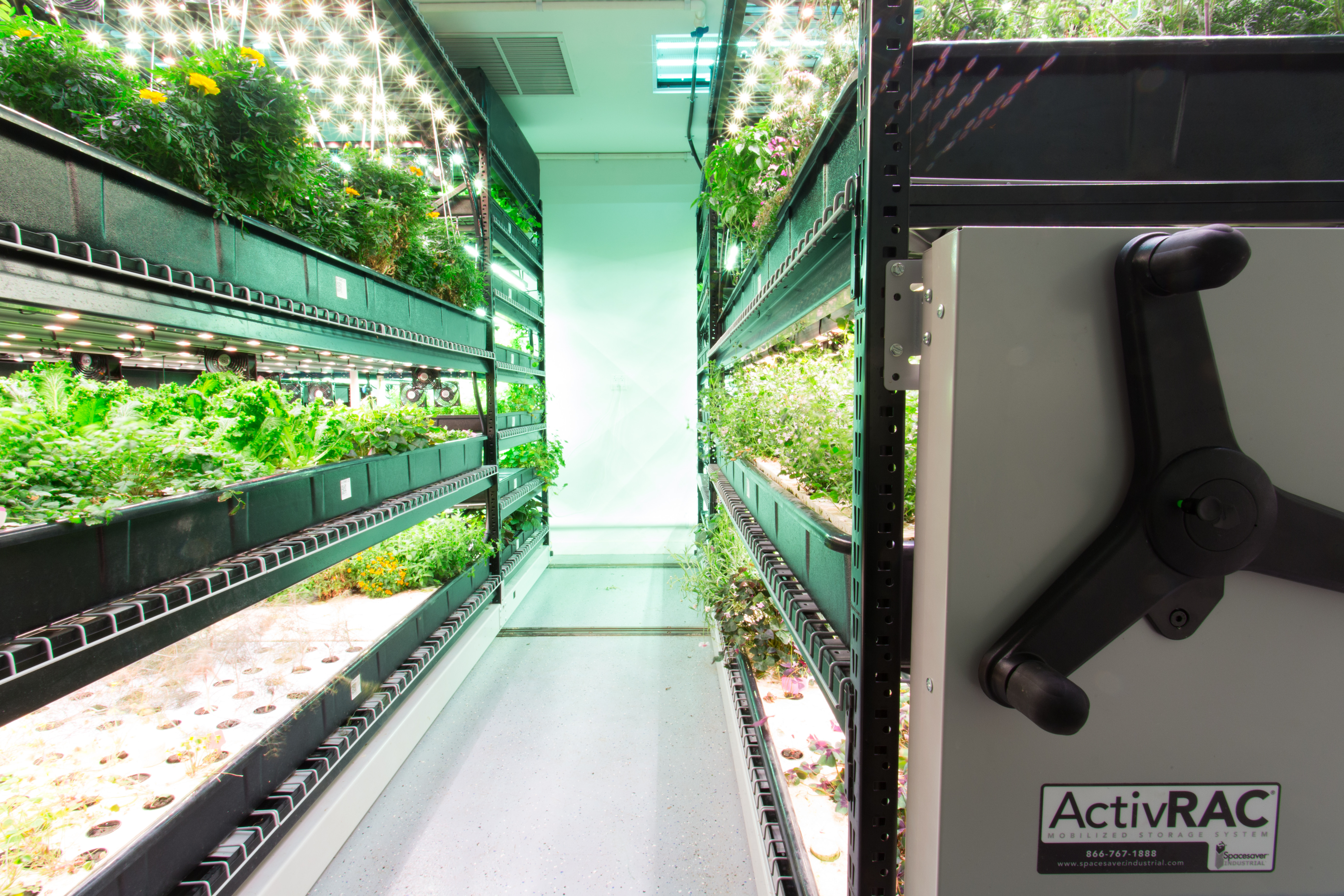 Mobile System Growing Hydroponic Vegetables