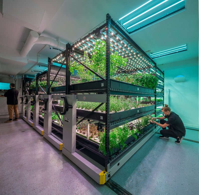 hydroponic grow facility for vegetables