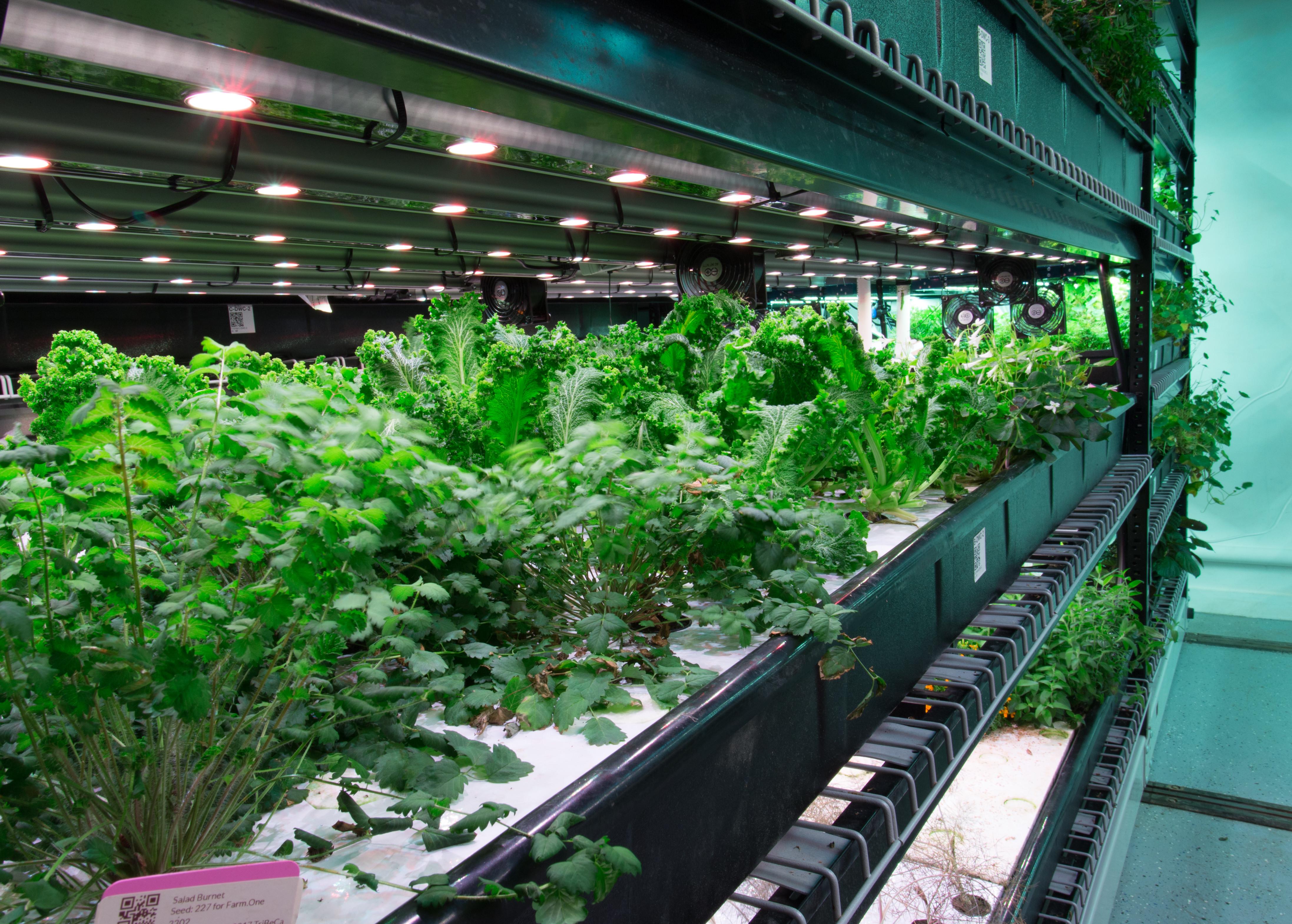 Hydroponic Grow Facility